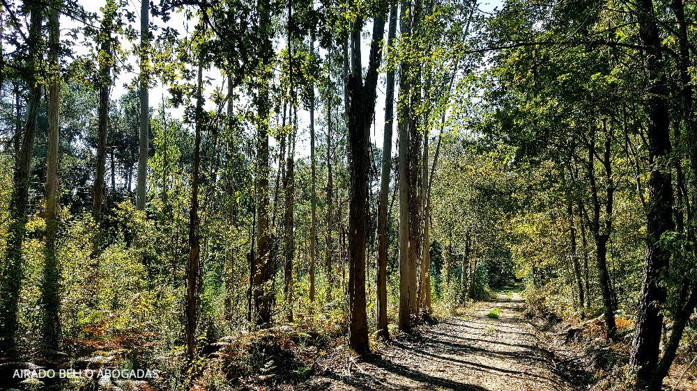 eucaliptos-airado-bello-abogadas